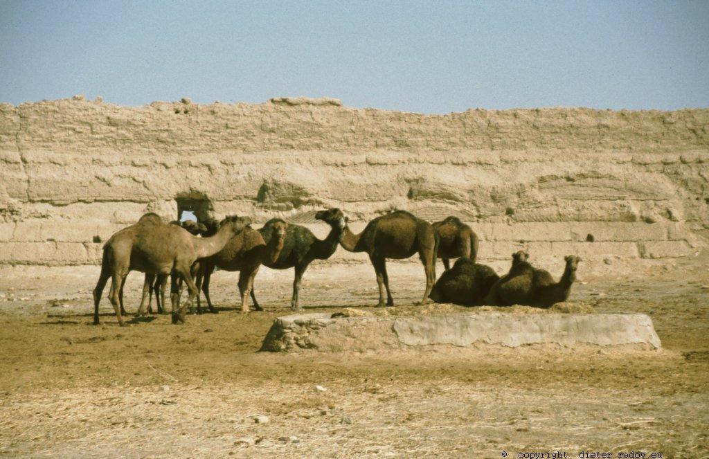 Iran - Khorasan 259 Karawansereien zw Meshad und Mary