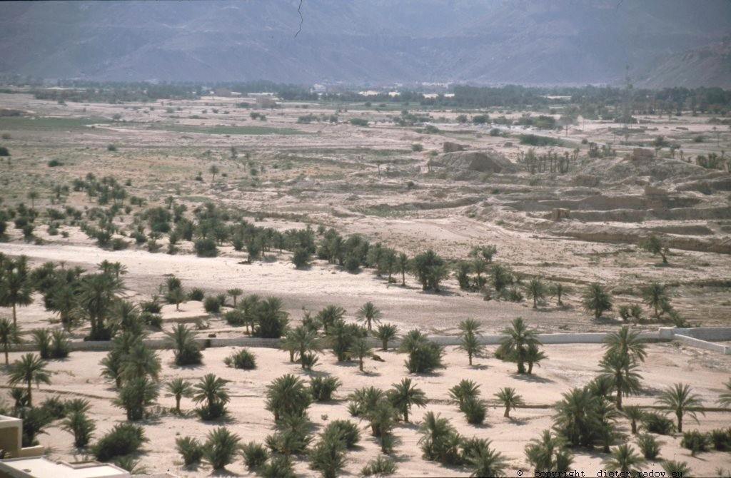 Jemen 1997: Dattelpalmen am Rande eines Wadis
