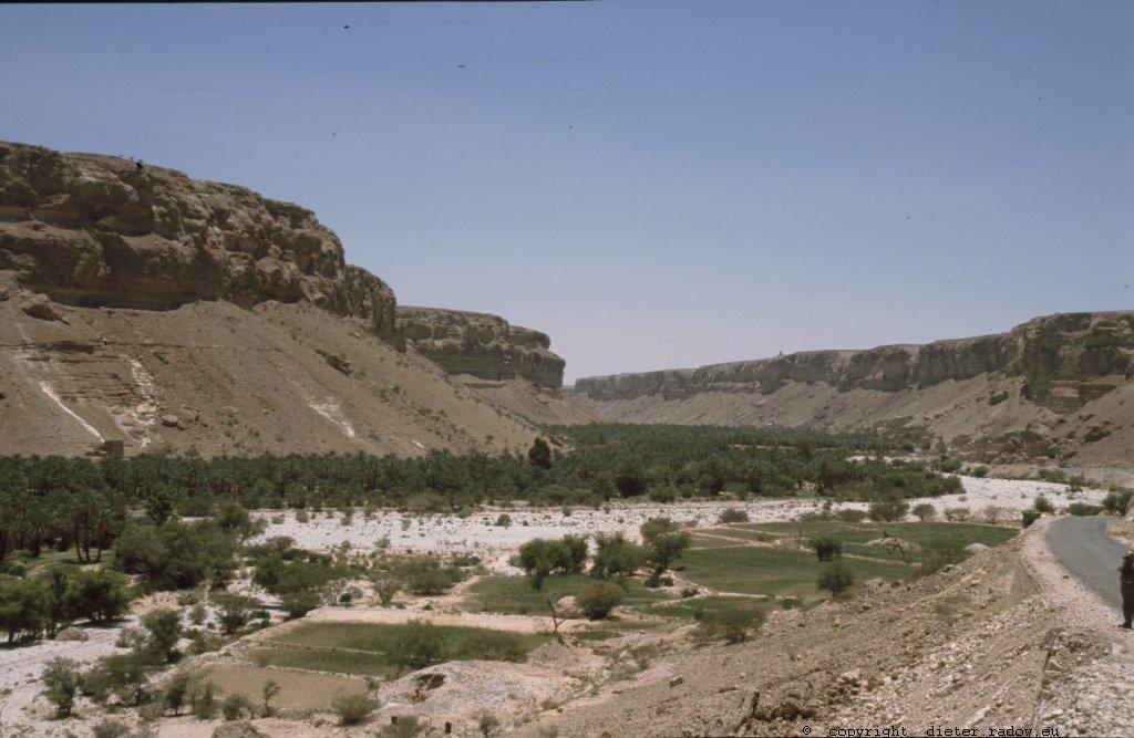 Jemen Wadi-Oase mit Dattelpalmen