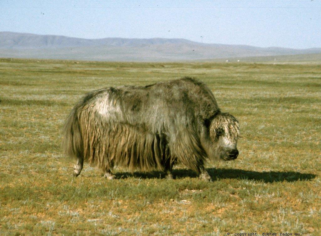 Mongolei 241
