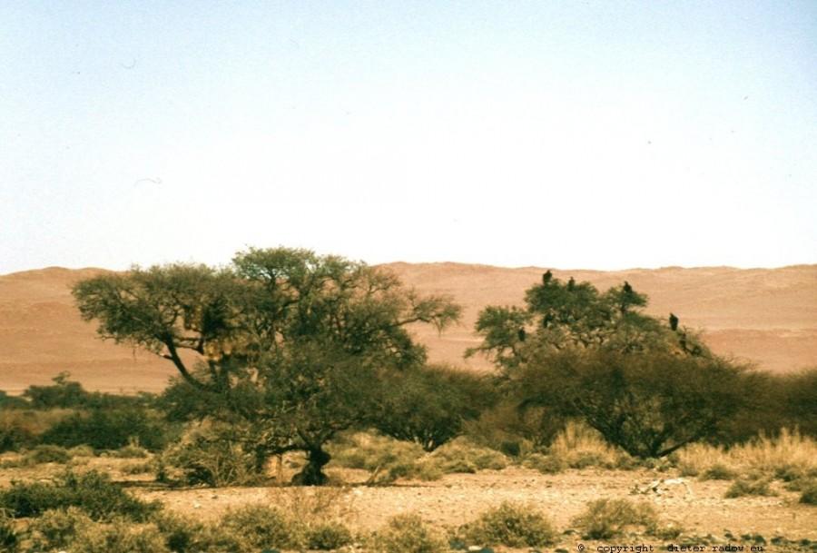 Namibia Namib-Naukluft-Wüste