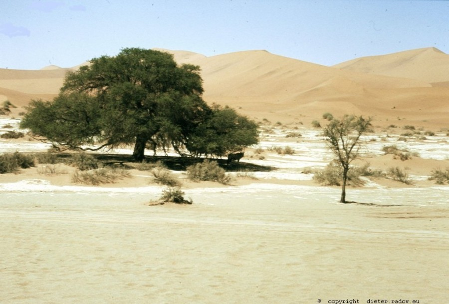 Namibia Sosusvlei in der Namib 3