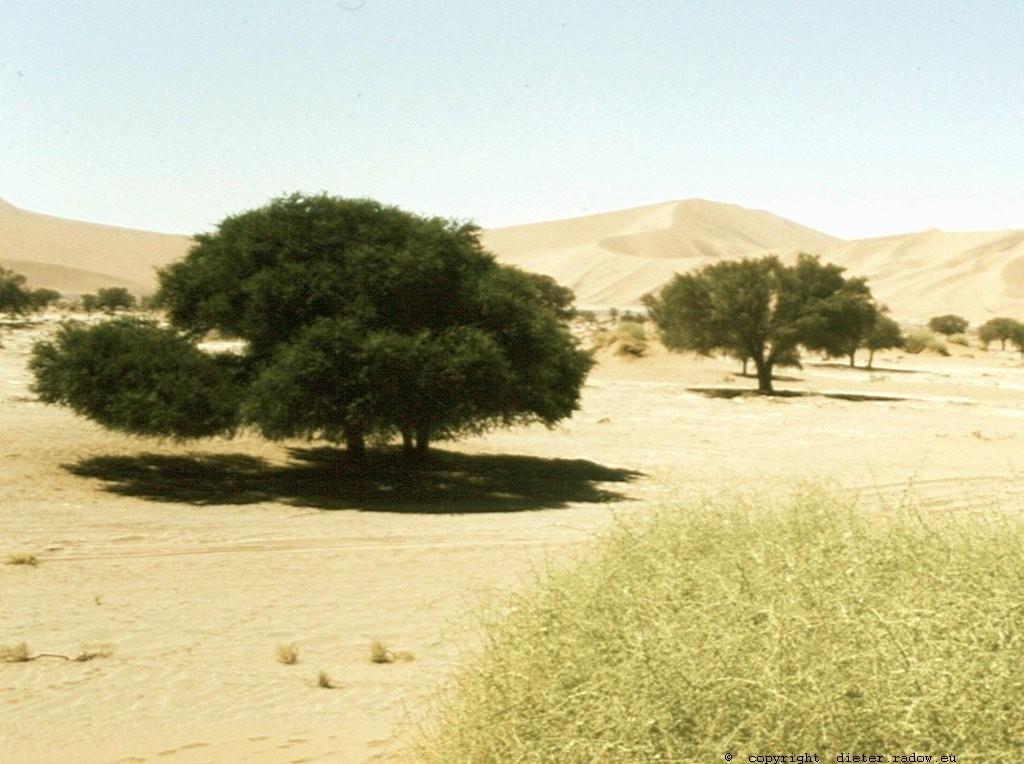 Namibia Sosusvlei in der Namib 6