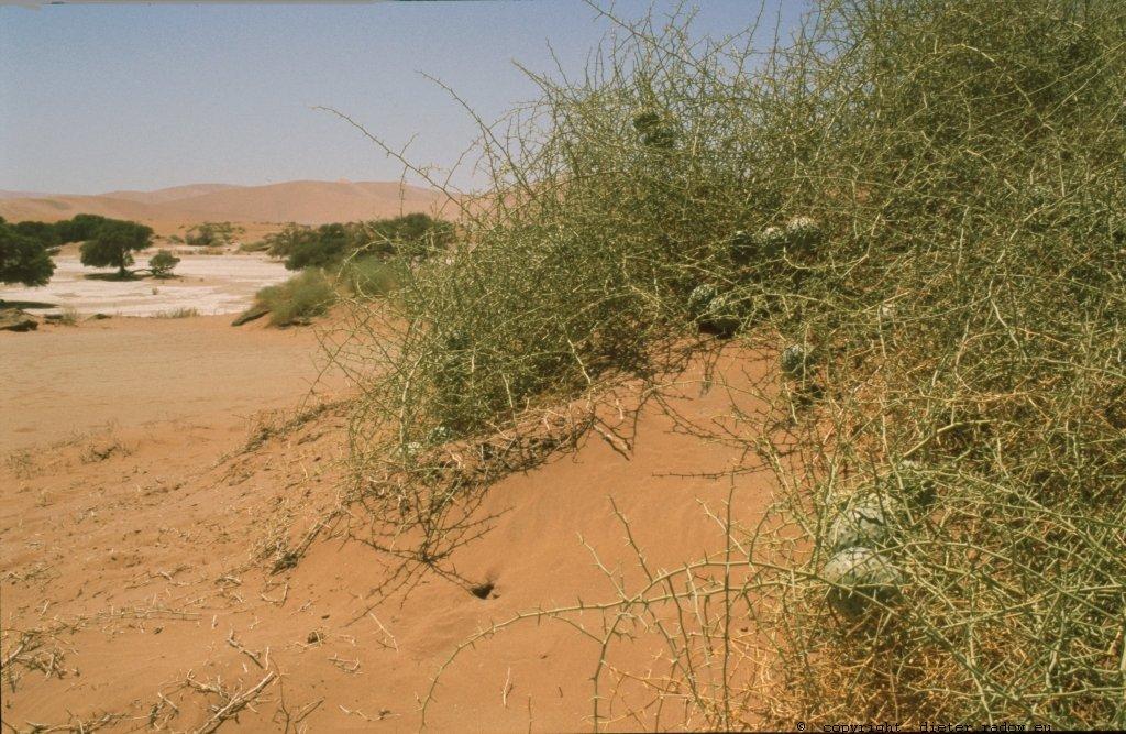 Namibia Sosusvlei in der Namib 9