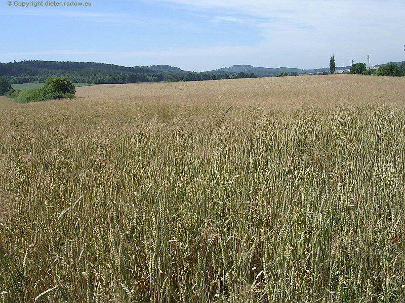 Schwöbber Weizen