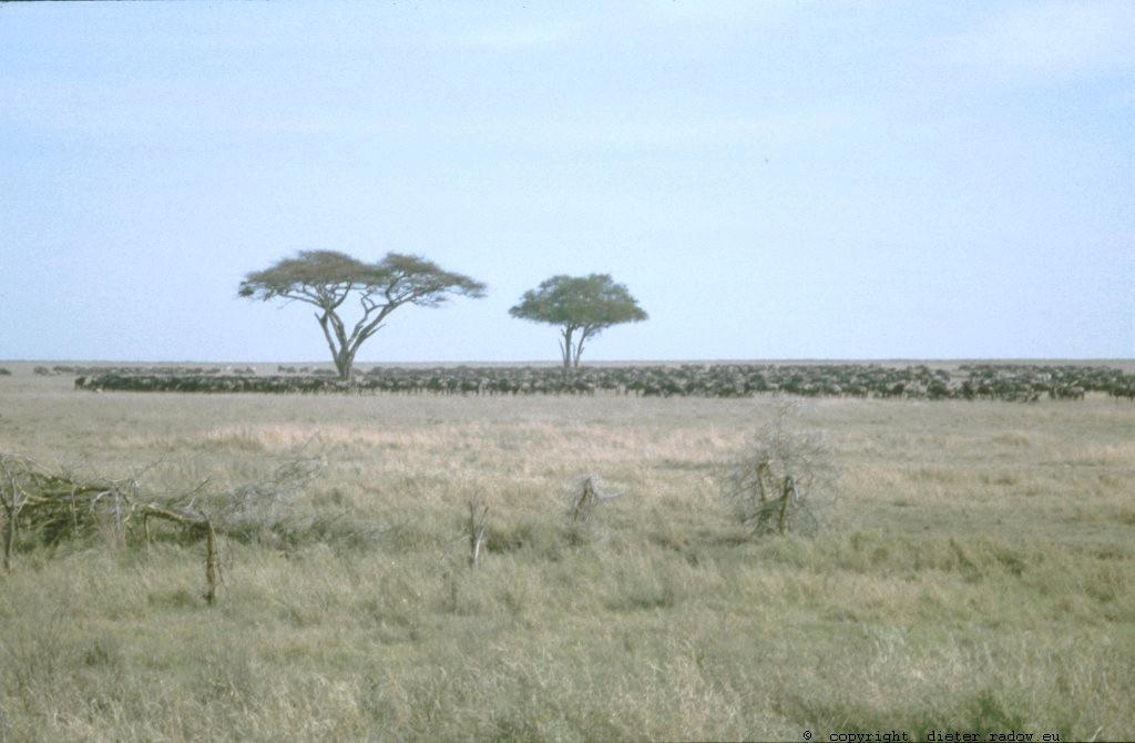 Tansania Masai Mara 15