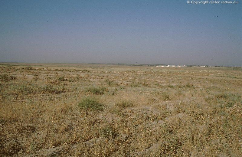Usbekistan Erdnußfeld
