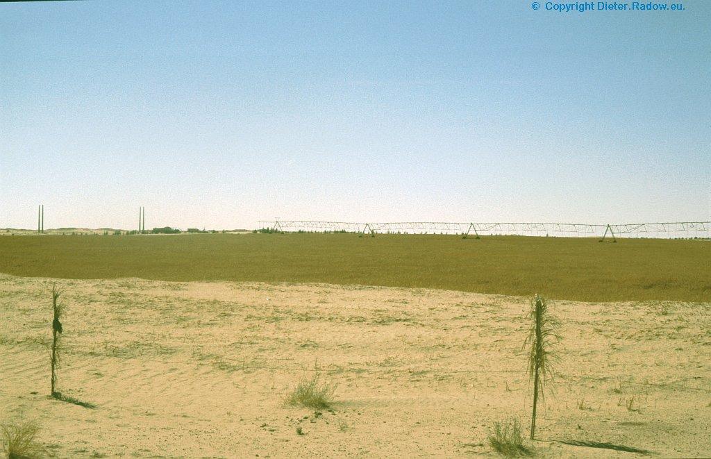 Algerien Sahara künstlich bewässertes Feld 1
