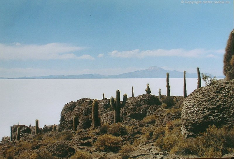 Bolivien Salar de Uyuni Kakteeninsel kg