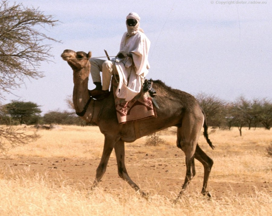 ZT Tuaregg-Geisterreiter