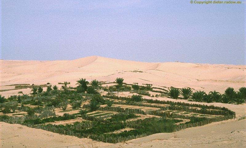 Zx Algerien Plantage in der Wüste Sahara