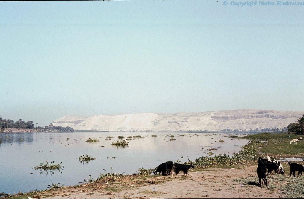 Ägypten Nil bei Tell el Amarna - Wasserhyazinthen