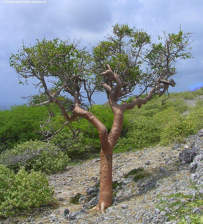 Niederländische Antillen - Aruba