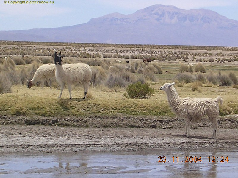 Bolivien Hochsteppe bei Oruro