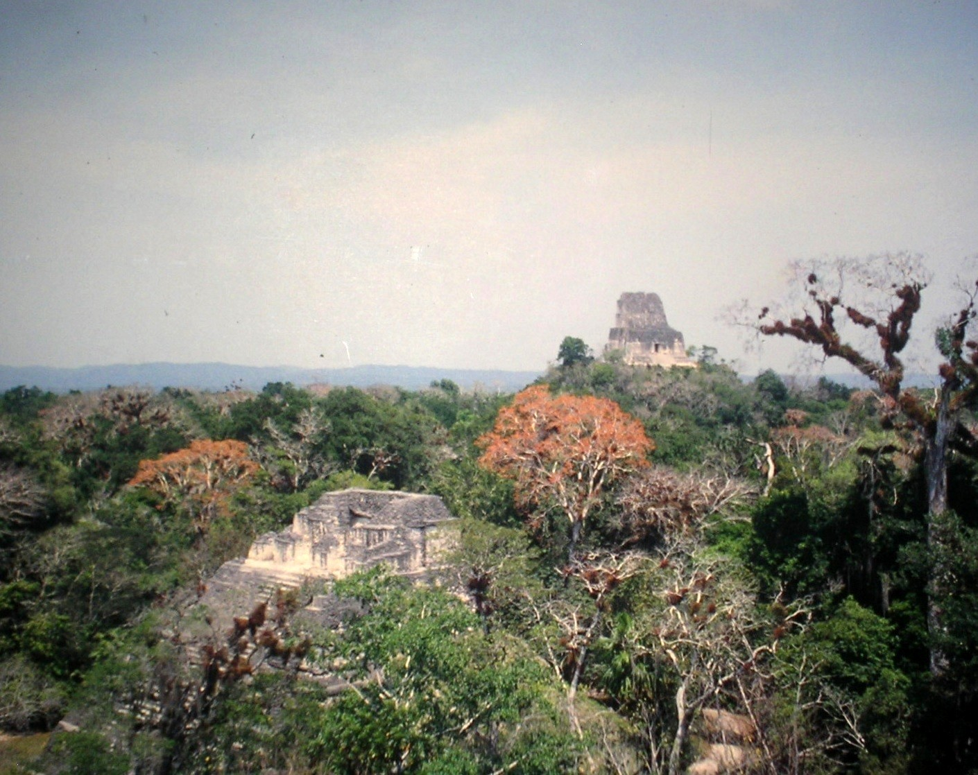 Guatemala tropischer Baumwuchs