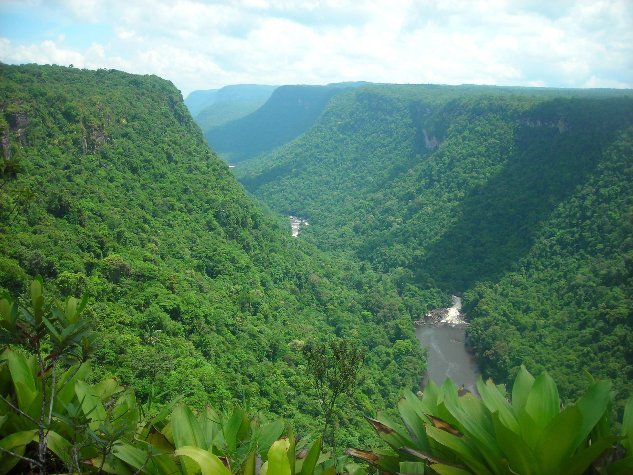 Guyana Urwaldtal