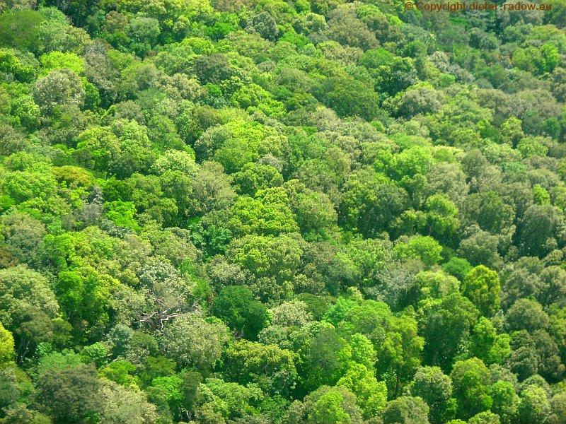 Guyana Urwald von oben
