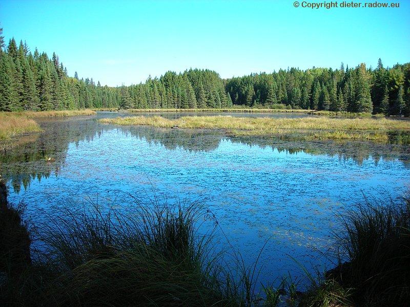 Kanada Fichtenwald in Sumpflandschaft