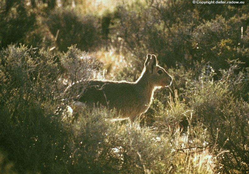 Patagonien Chobel