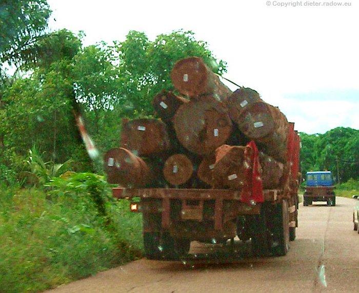 Surinam Tropenholz