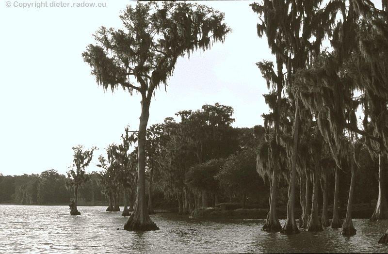 USA Florida Bäume in Everglades-Wasser