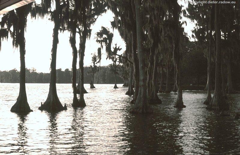 USA Florida Everglade-Bäume i Wasser