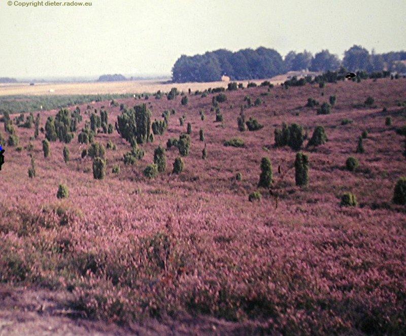 Lüneburger Heider 1968