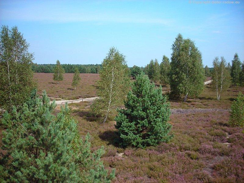 Reicheskreuzer Heide 4.