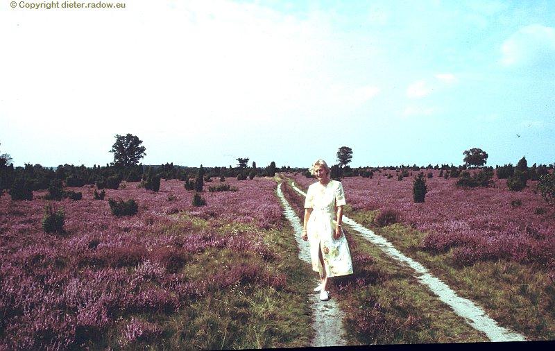 Lüneburger Heide in voller Blüte