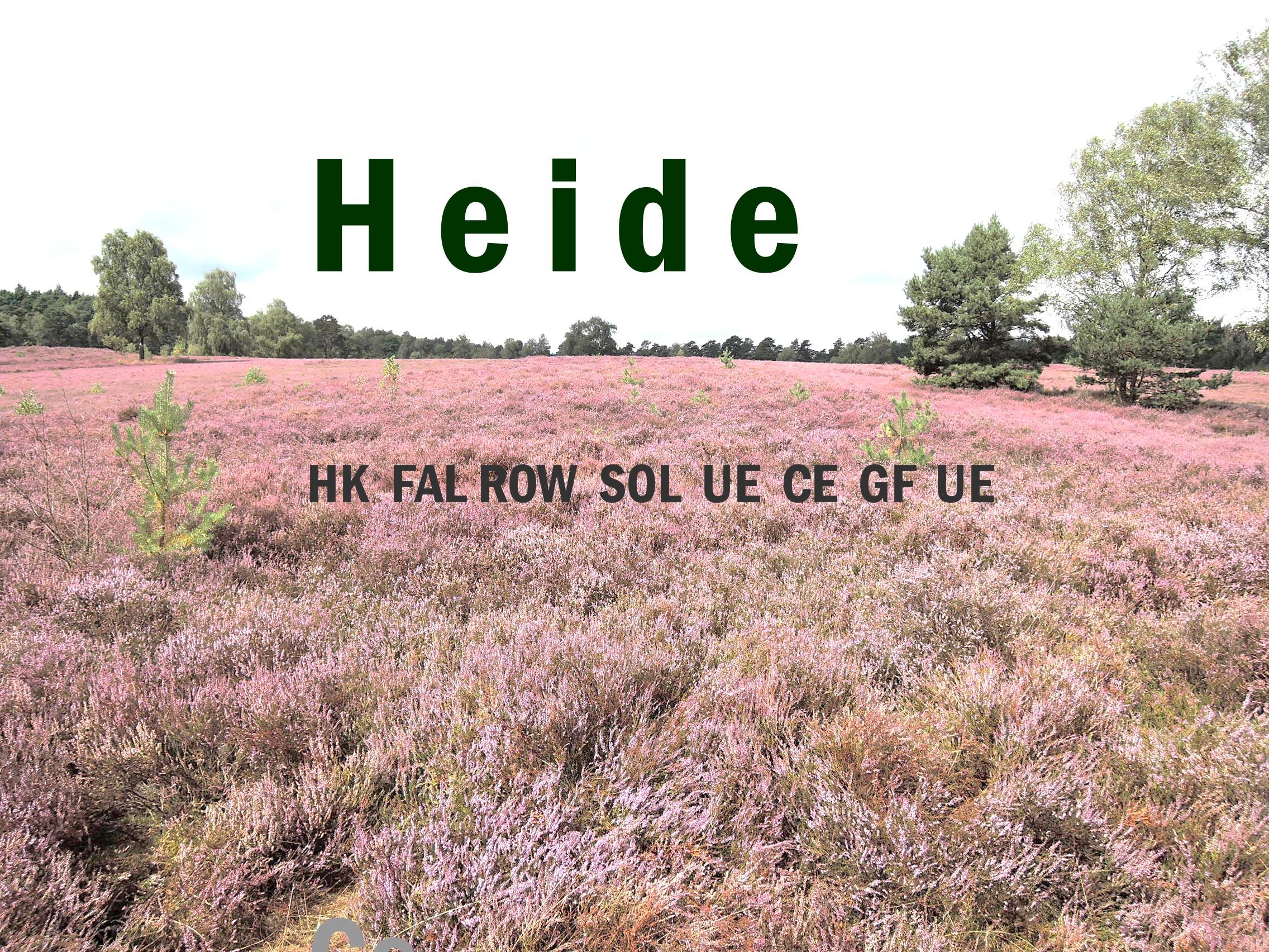 h-10-heide